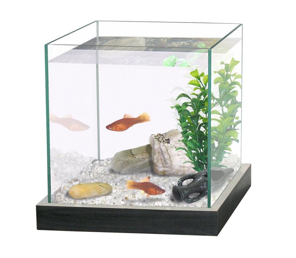 Aquarium pour combattant - 8L