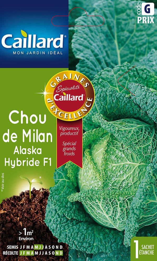 Chou Milan Alaska Hybride F1