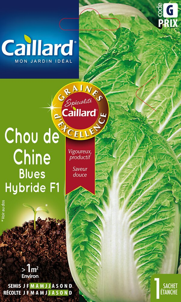 Chou de Chine de blues Hybride F1