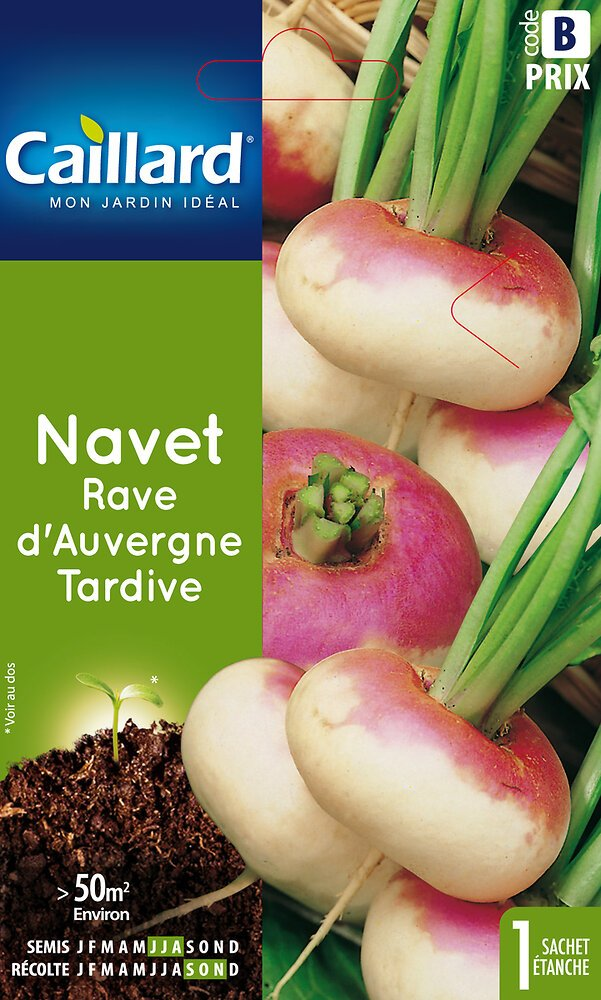 Navet rave Auvergne tardive