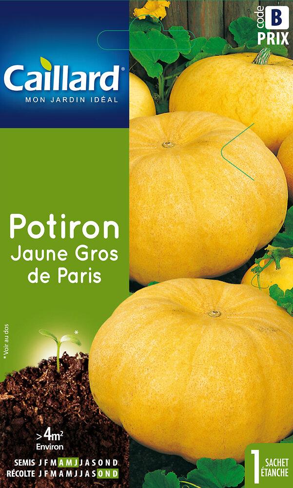 Potiron Jaune gros de Paris
