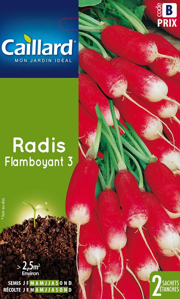 Radis flamboyant 3