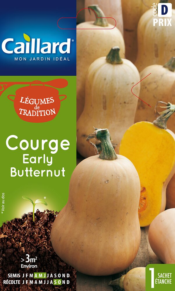Courge butternut Early