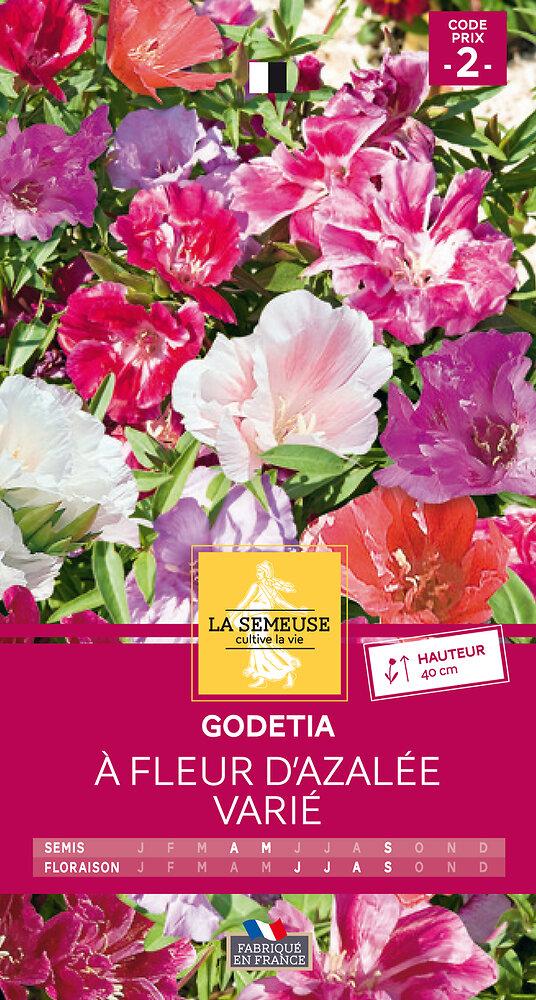 Godetia à fleur d'Azalée