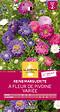 Reine-Marguerite à fleur de Pivoine