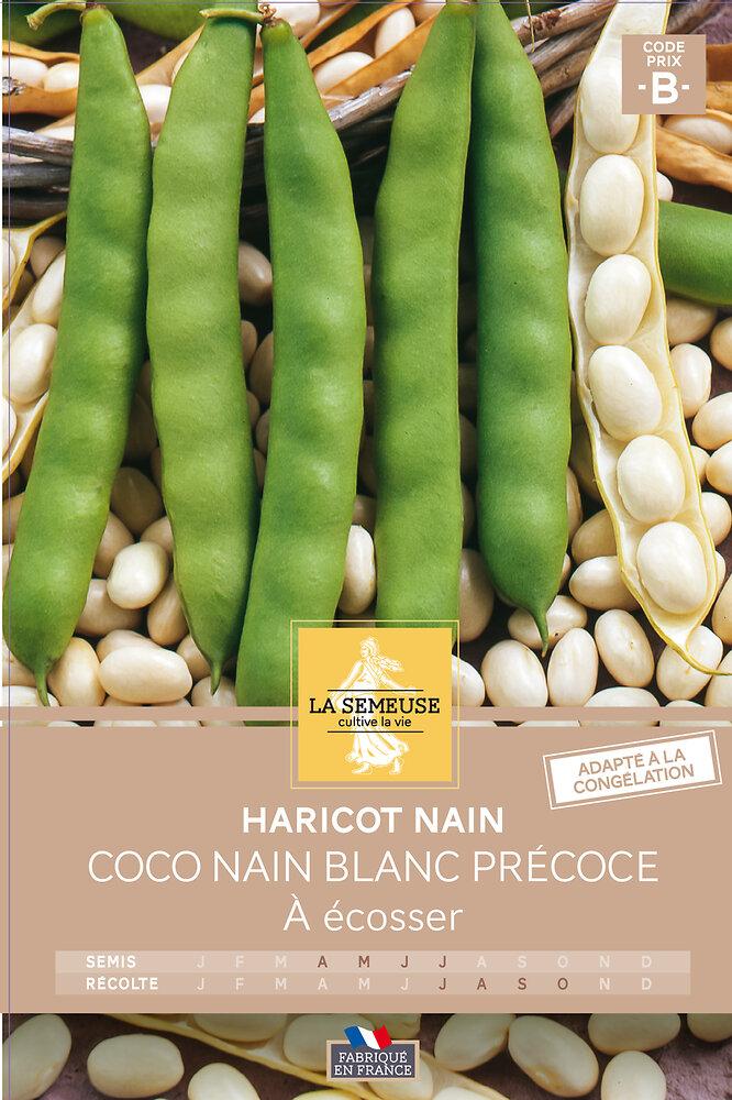 Haricot coco nain blanc précoce