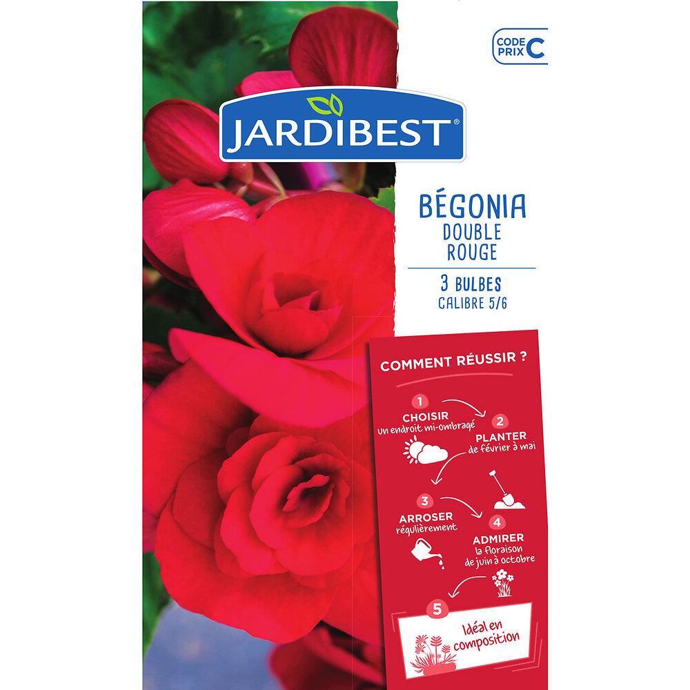 3 bulbes de begonias doubles rouges