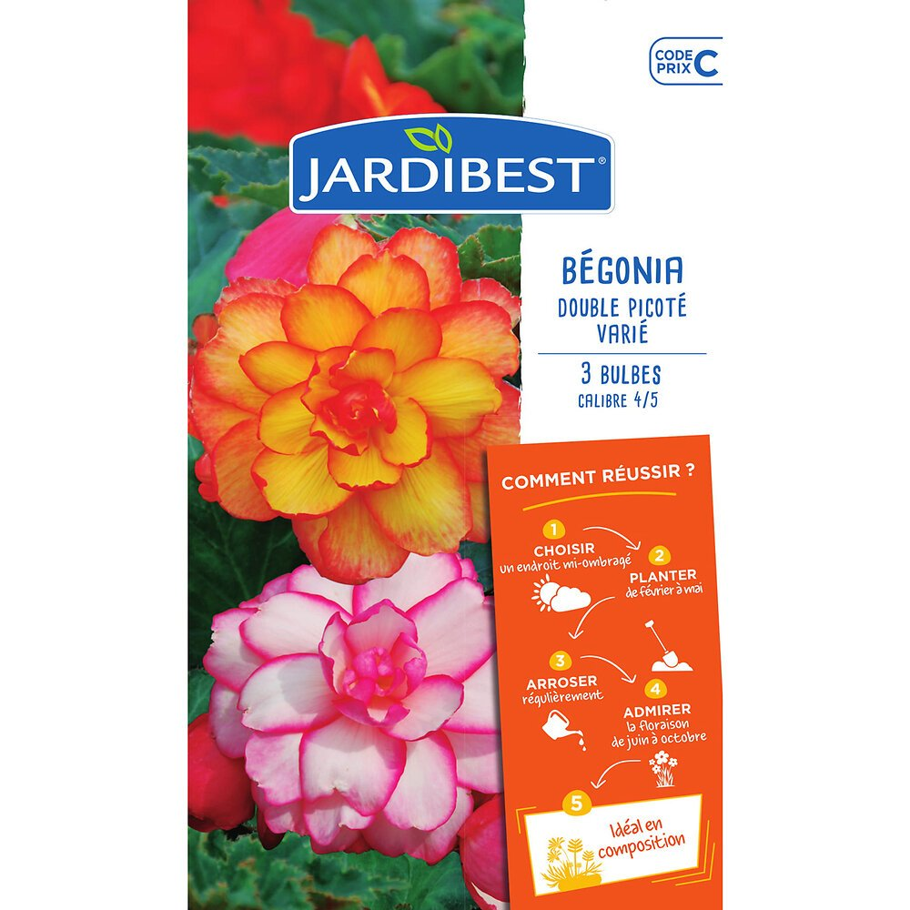 3 bulbes de Begonias Picotee Variés