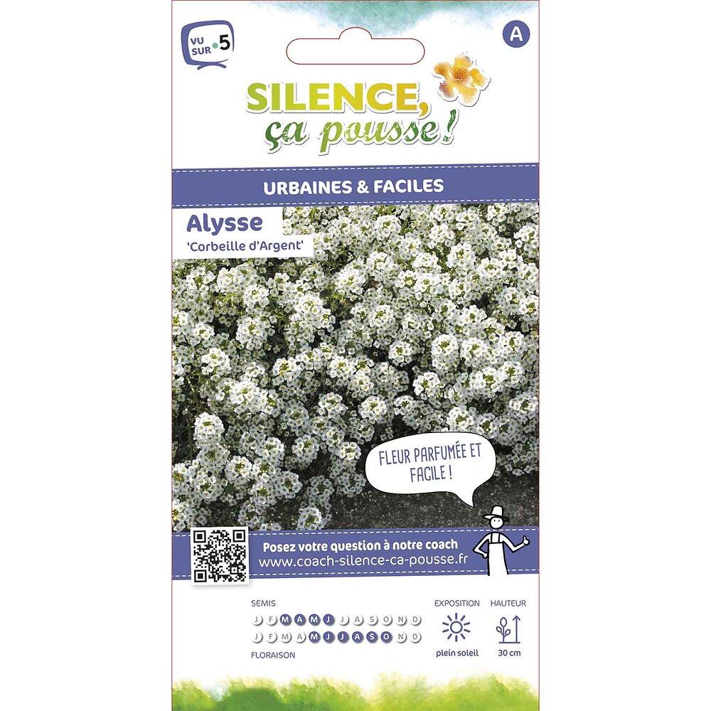 Semences de alysse odorante corbeille d'argent 0.5g