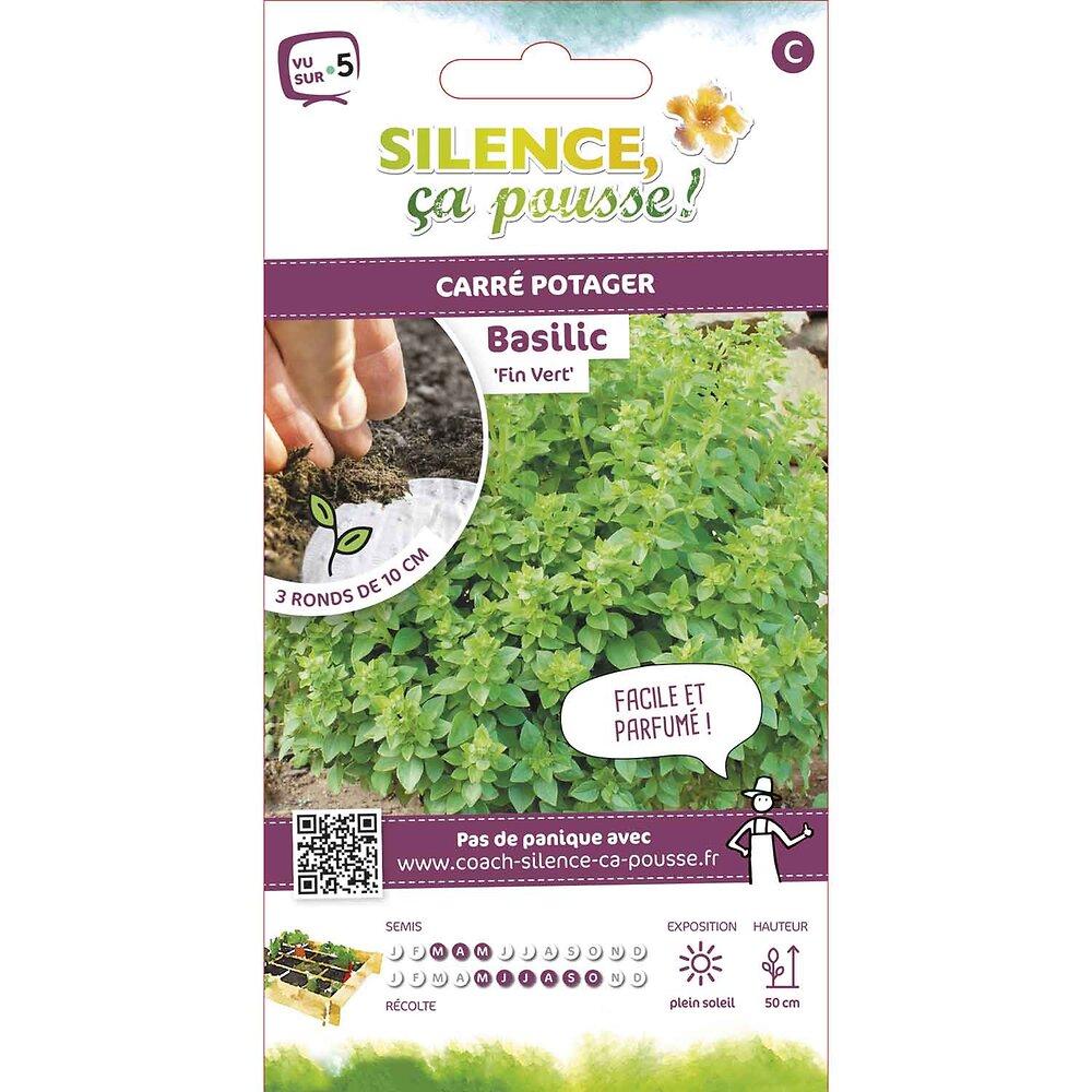 Semences de basilic fin vert rondg