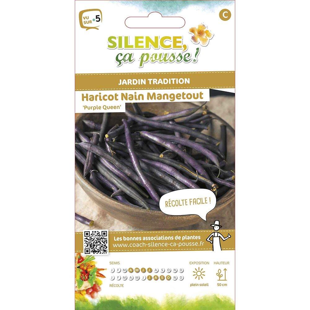 Semences de haricot nain mangetout cosses violettes purple queen 15g