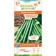 Semences de haricot nain mangetout contender 80g