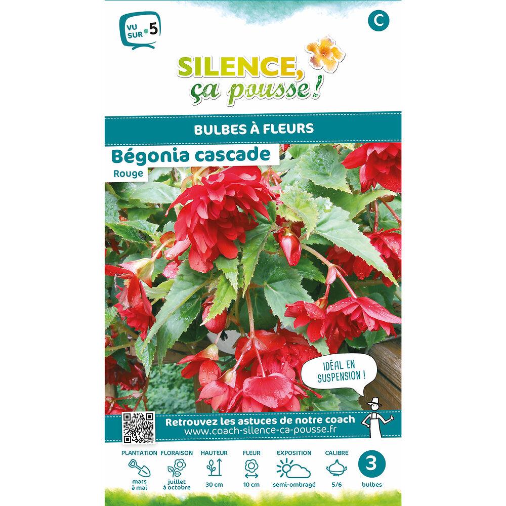 Bulbe à fleur Bégonia cascade rouge 5/6 x3