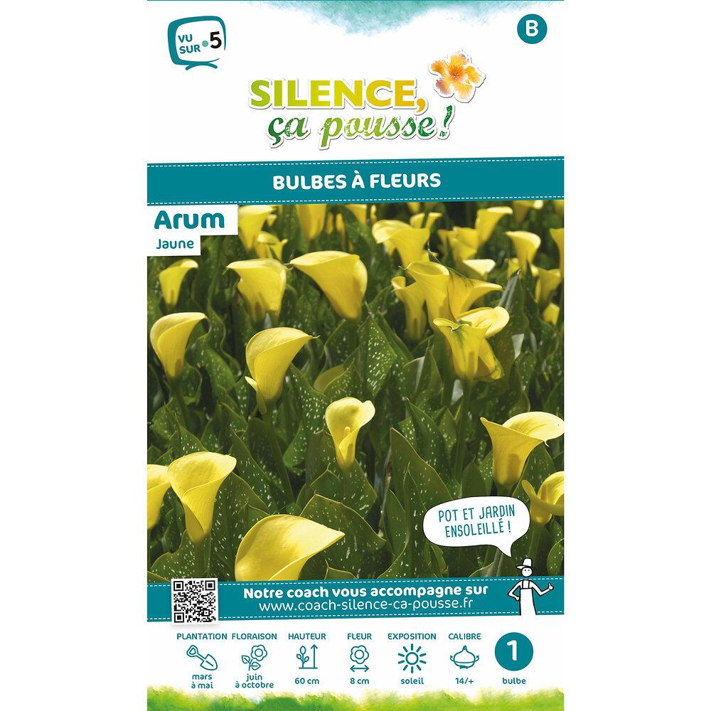 Bulbe à fleur Arum jaune 14/+ x1
