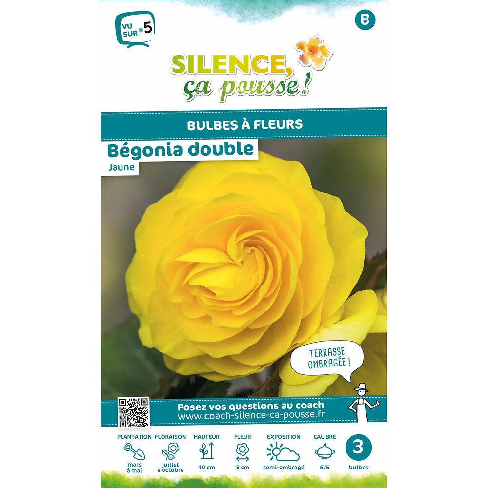 Bulbe à fleur Bégonia double jaune 5/6 x3