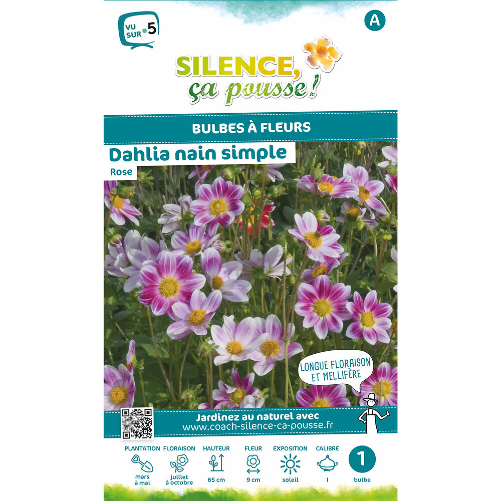 Bulbe à fleur Dahlia nain simple rose I x1