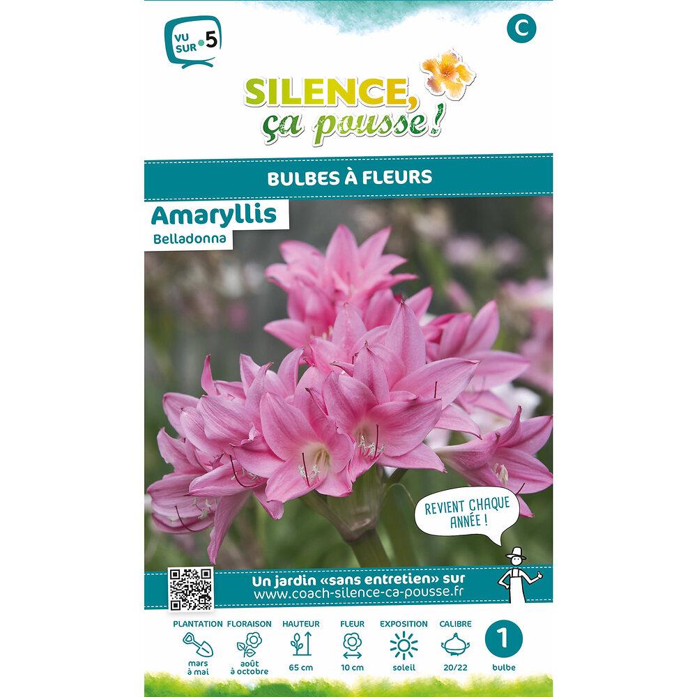 Bulbe à fleur Amaryllis belladonna rose 20/22 x1
