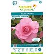 Bulbe à fleur Bégonia double rose 5/6 x3
