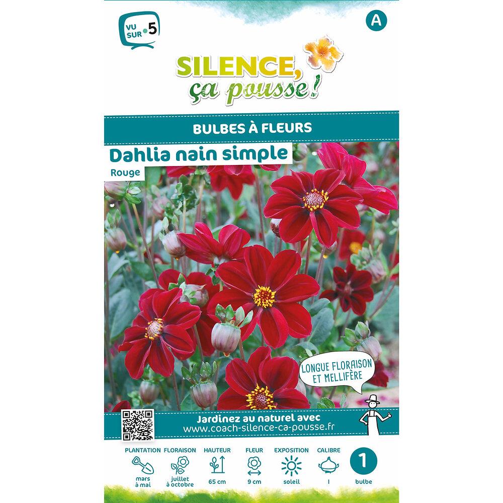 Bulbe à fleur Dahlia nain simple rouge I x1