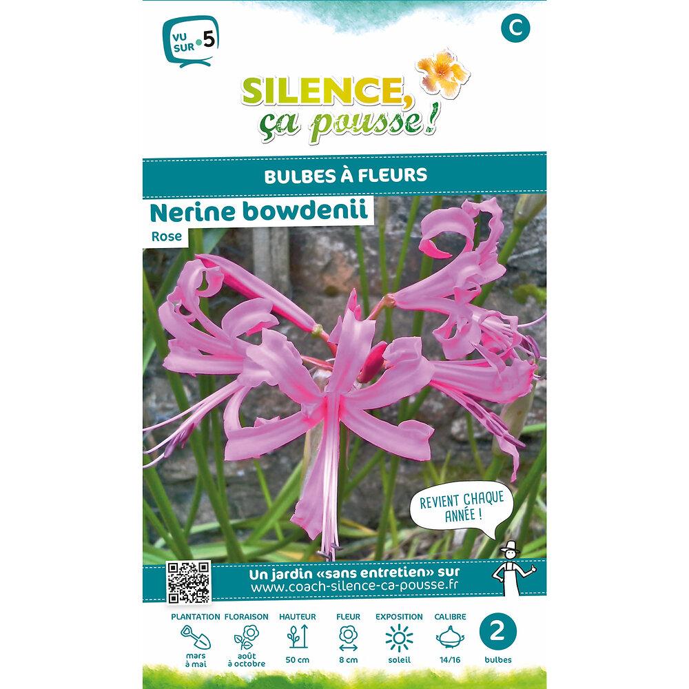 Bulbe à fleur Nerine bowdenii rose 14/16 x2