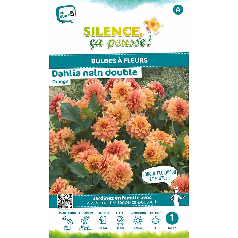Bulbe à fleur Dahlia nain double orange I x1