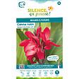 Bulbe à fleur Canna nain feuillage vert rouge I x1