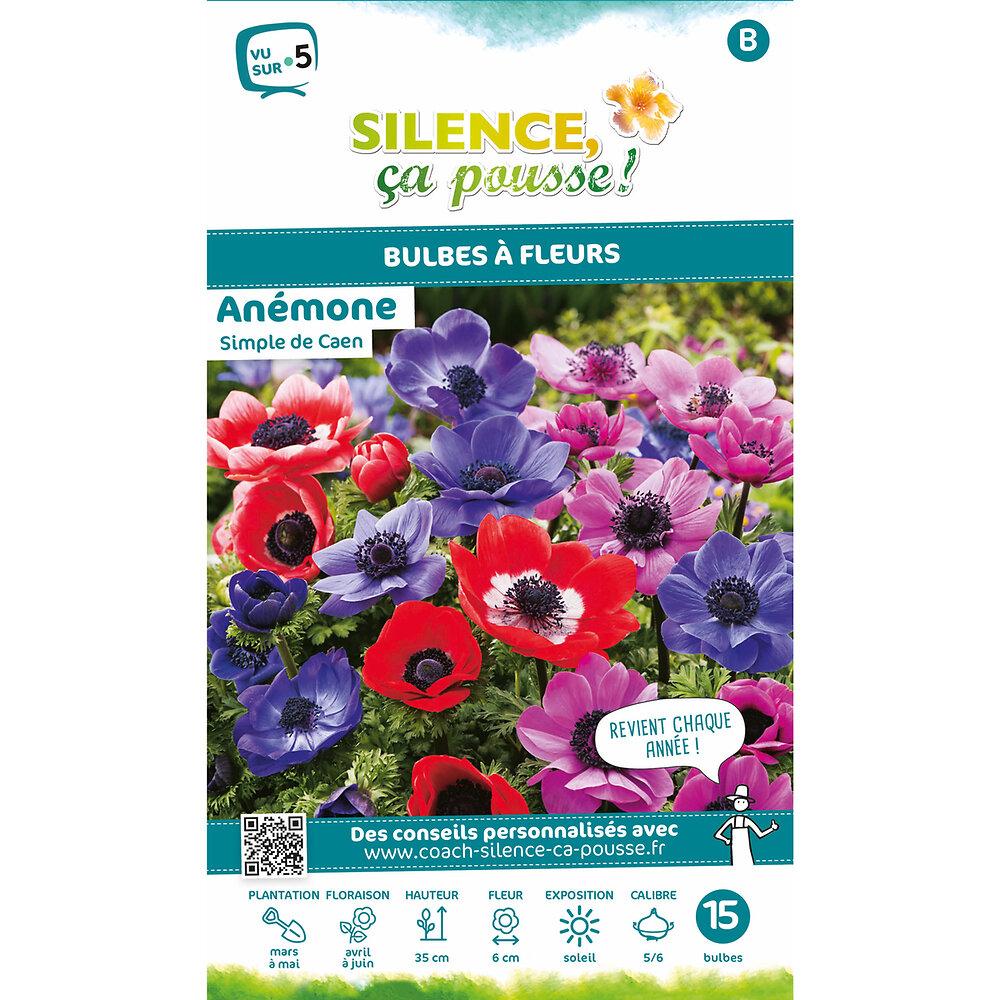 Bulbe à fleur Anémone simple de caen varie 5/6 x15