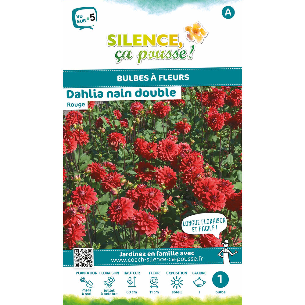 Bulbe à fleur Dahlia nain double rouge I x1