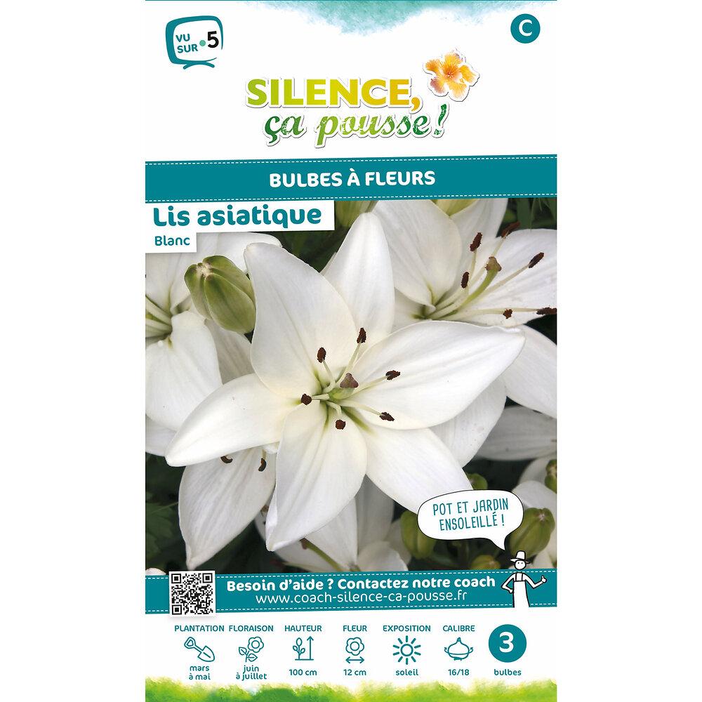 Bulbe à fleur Lis asiatique blanc 16/18 x3