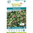 Bulbe à fleur Oxalis deppei / trèfle à 4 feuilles rose 5/6 x25