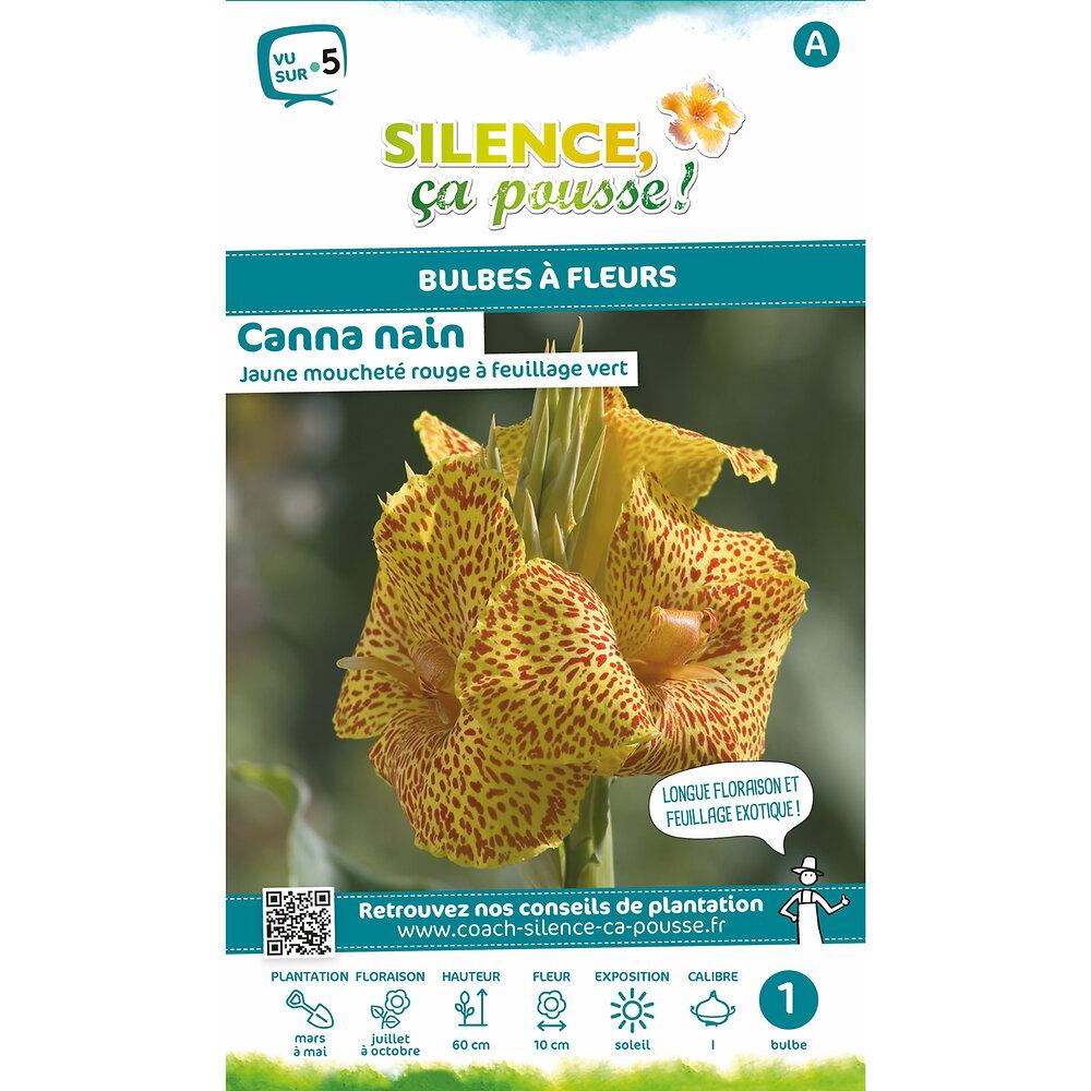 Bulbe à fleur Canna nain feuillage vert jaune moucheté rouge I x1