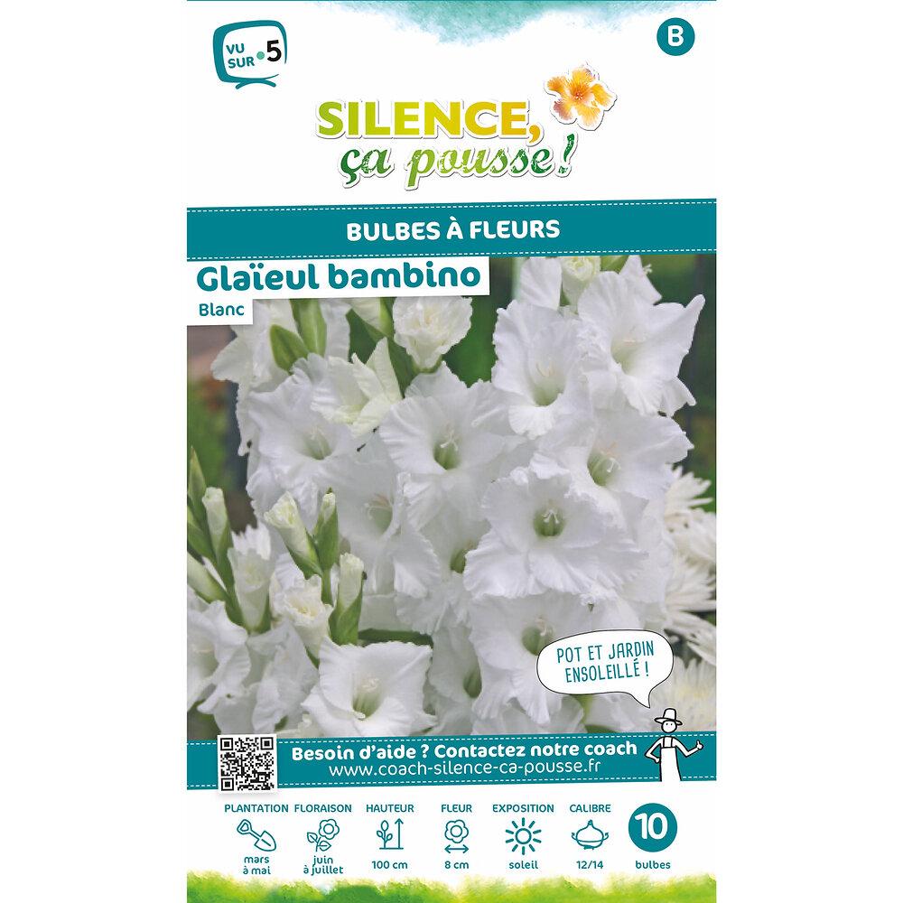 Bulbe à fleur Glaïeul bambino blanc 12/14 x10