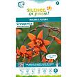 Bulbe à fleur Crocosmia emily mac kenzie orange coeur grenat 8/10 x9