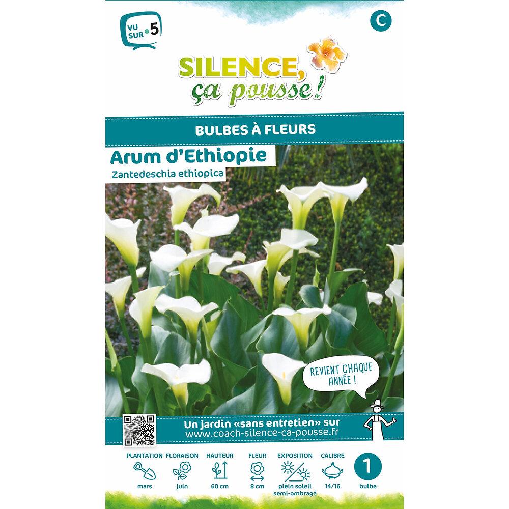 Bulbe à fleur Arum d'Ethiopie blanc 14/16 x1
