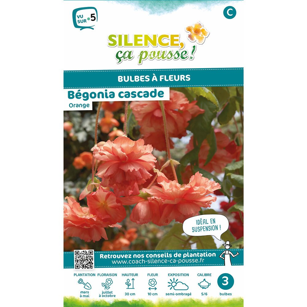 Bulbe à fleur Bégonia cascade orange 5/6 x3