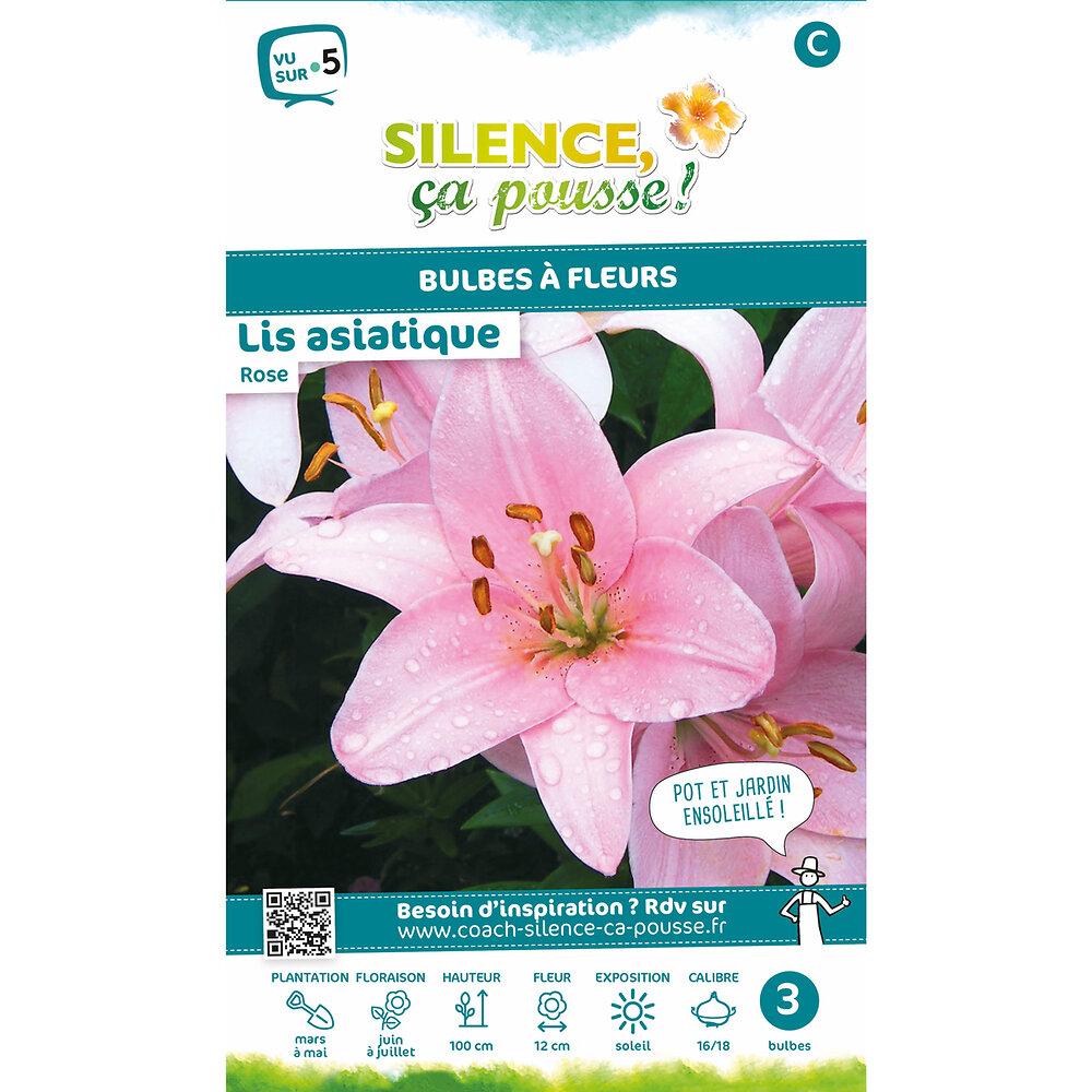 Bulbe à fleur Lis asiatique rose 16/18 x3