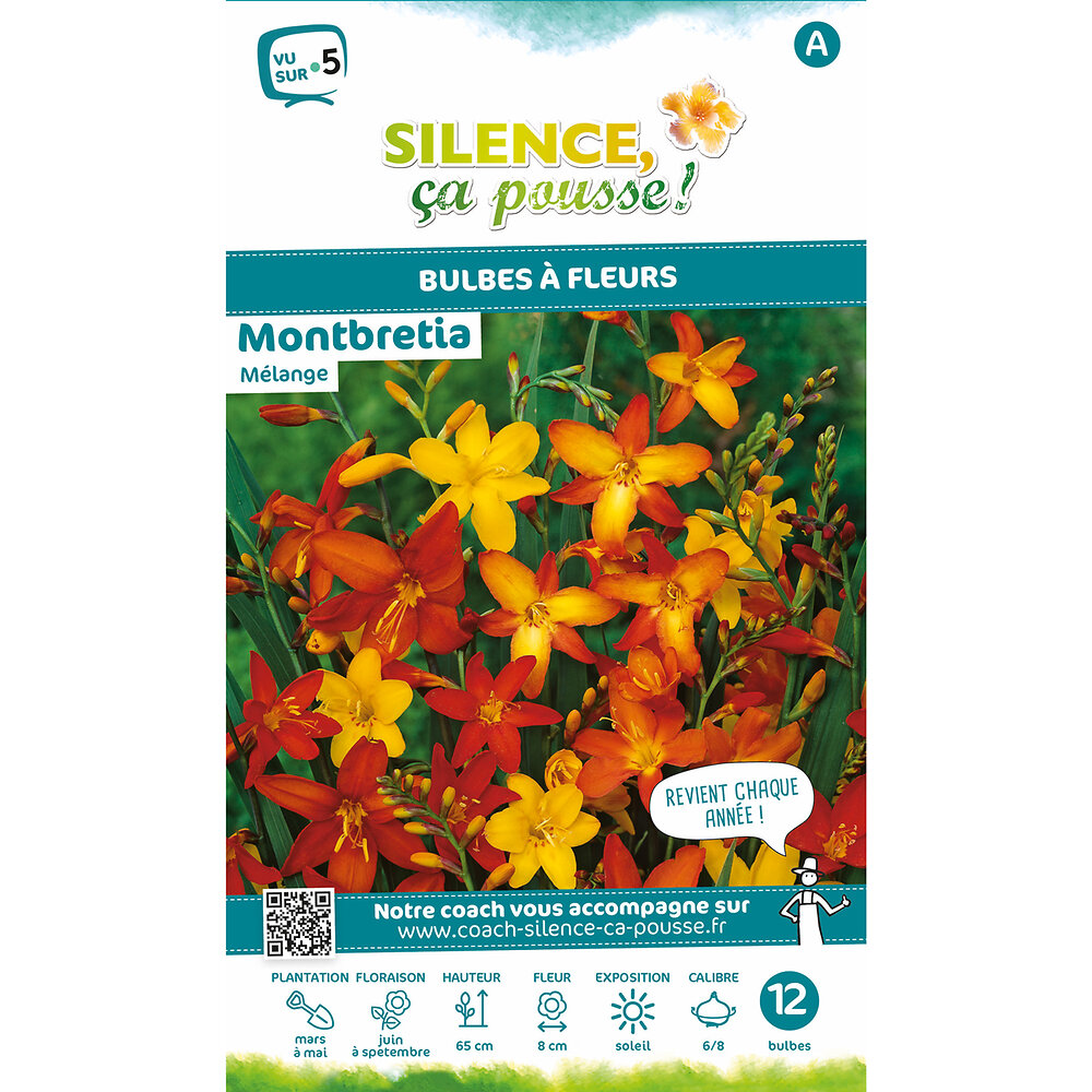 Bulbe à fleur Montbretia mélange rouge orange 6/8 x12