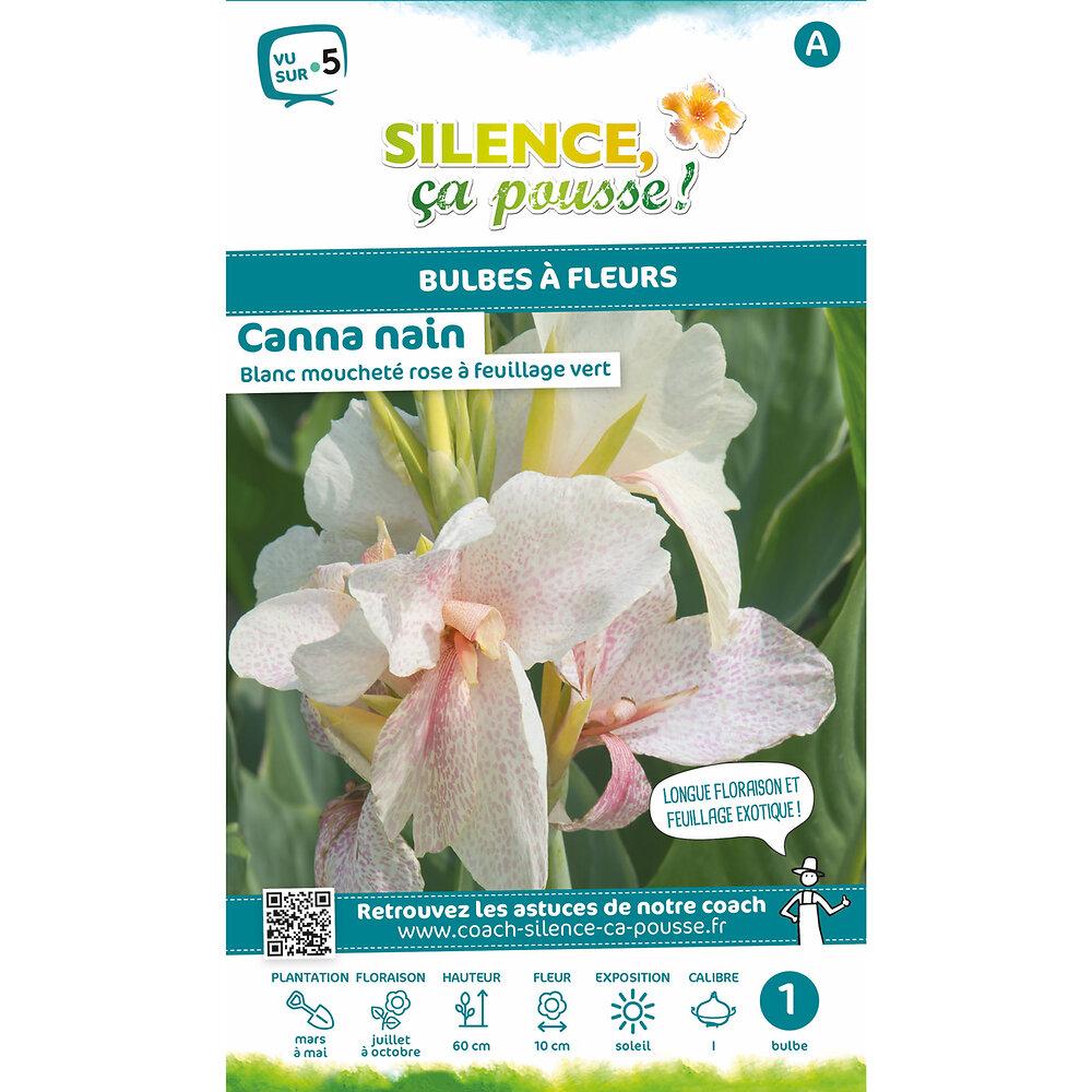 Bulbe à fleur Canna nain feuillage vert blanc moucheté rose I x1