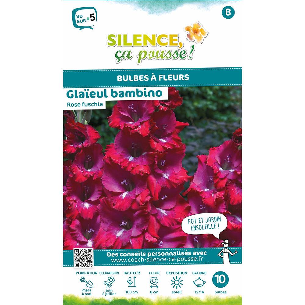 Bulbe à fleur Glaïeul bambino rose fuchsia 12/14 x10