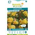Bulbe à fleur Bégonia cascade jaune 5/6 x3