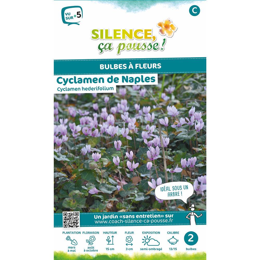 Bulbe à fleur Cyclamen de naples rose 13/15 x2