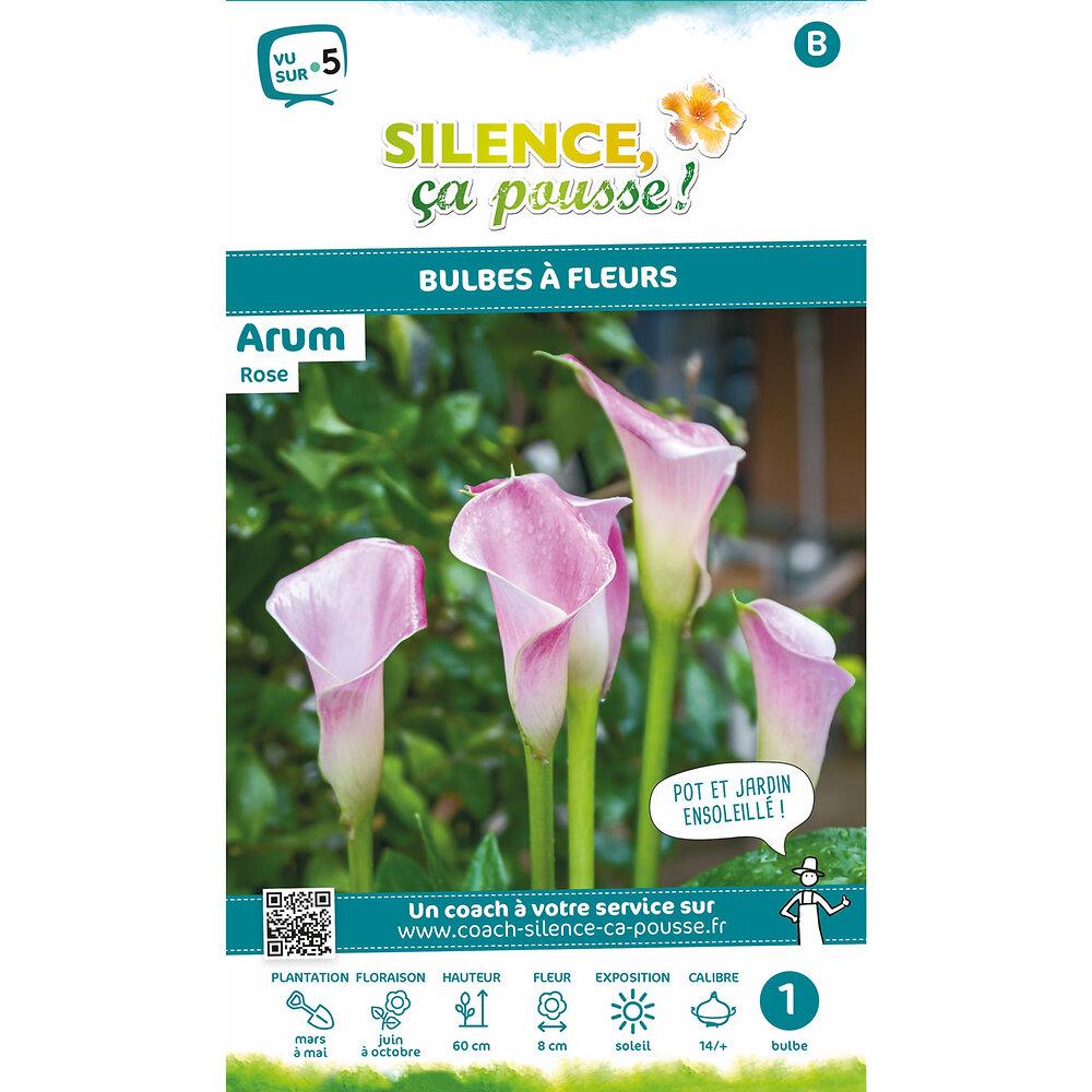Bulbe à fleur Arum rose 14/+ x1