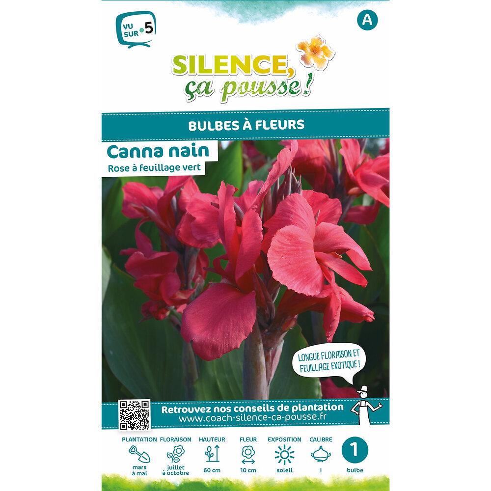Bulbe à fleur Canna nain feuillage vert rose I x1