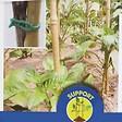 Tuteur Synthétique Bambou  Taille 1.8 M