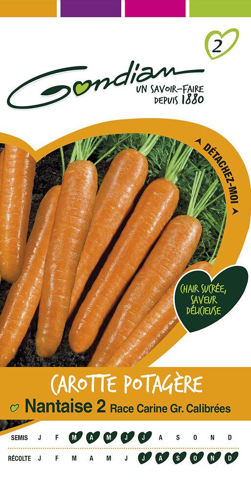 Carotte potagère nantaise 2 race Carine gr. calibrées