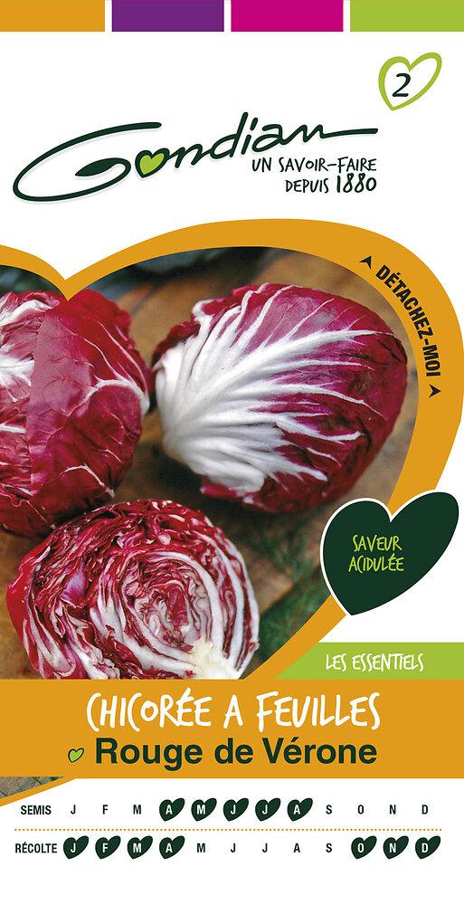 Chicorée à feuilles rouge de Vérone
