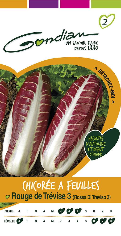 Chicorée à feuilles rouge de Trévise 3 'rossa di trévise 3'