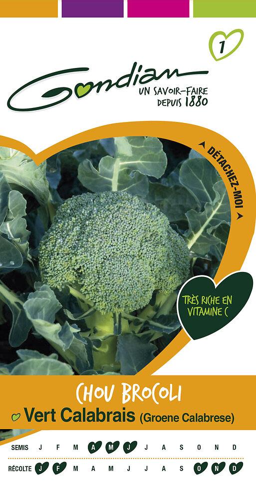 Chou brocoli vert calabrais 'groene calabrese'