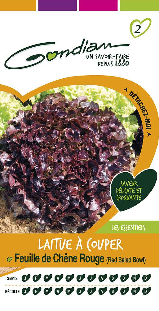 Laitue à couper feuille de chêne rouge 'red salad bowl'