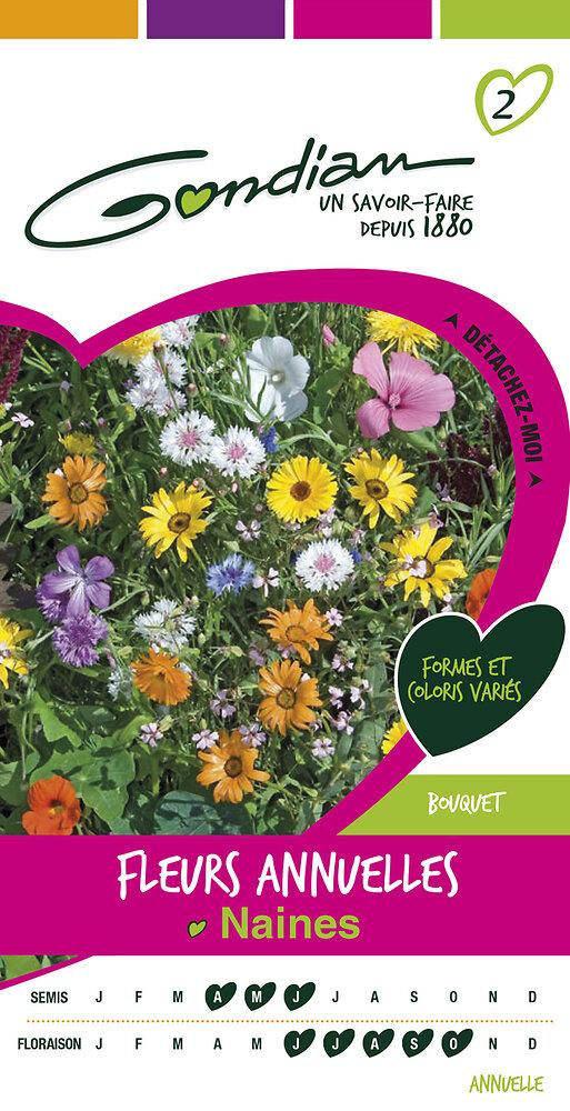 Fleurs annuelles naines